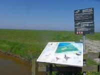 natuurreservaat-it-fryske-gea