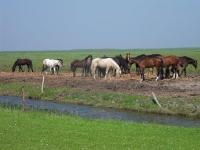 paarden-buitendijks