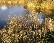 herfst rond de waterplas