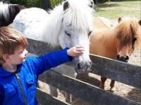 friesland pony