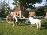 pony's als buren